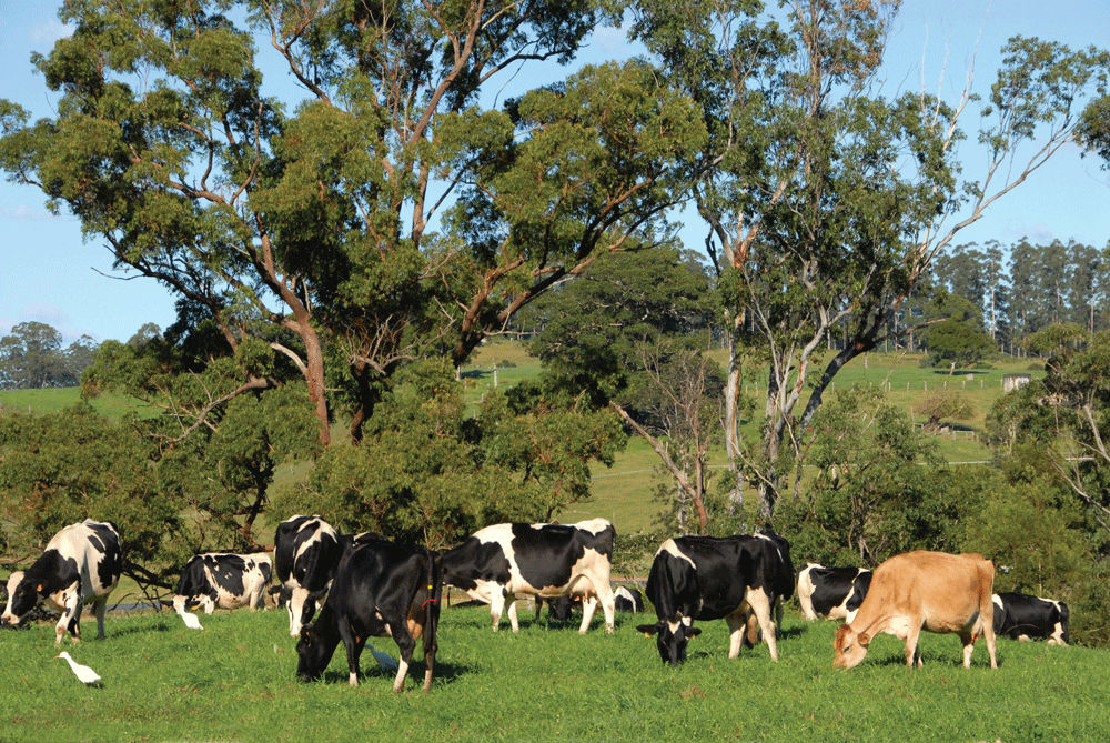 SUPPLY AND DEMAND RULES OF US DAIRY PRODUCERS